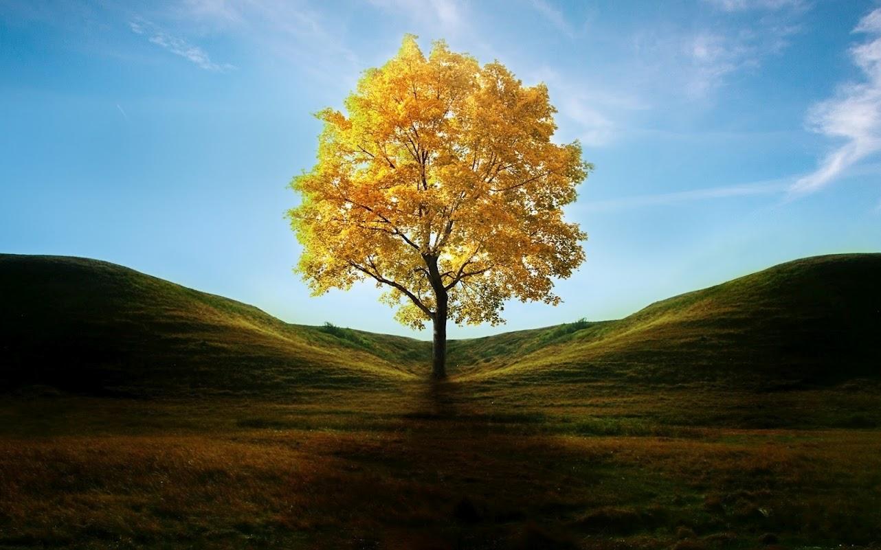 albero-grande